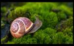 Adventurous Grove Snail by KeldBach