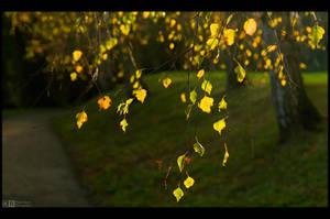 A Fleeting Glimpse of Fall by KeldBach