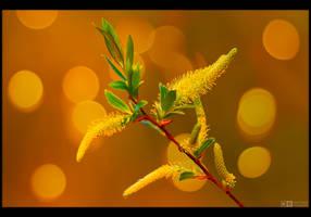 Longing for Spring by KeldBach