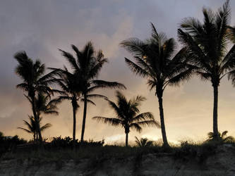 Sunset Palms by Zhaanman