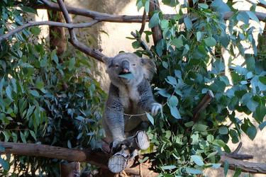 Tasty Eucaliptus by Firija