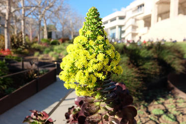 At Getty's center by Firija