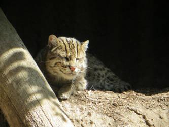(not quite Cheshire) smiling cat by Firija