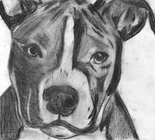American Pit Bull by SycoMonster