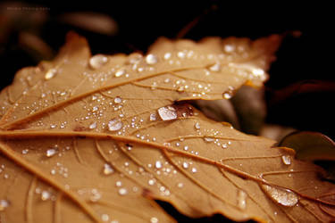 Autumn Drops II by Nidia8