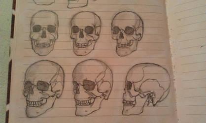 Male skull study by Summaresta