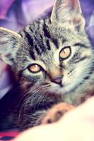 kitty by Schmogg