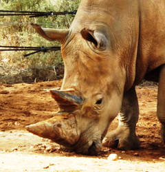 Sanctuary for a Rhino. by phasai