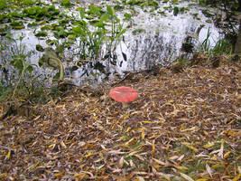 magic mushroom by phasai
