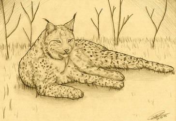 Lynx by Angeru-chin