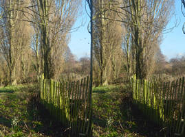 Poplars By The South Norwood Country Park Lake by aegiandyad