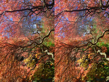 Stereoscopic Autumnal Magic by aegiandyad