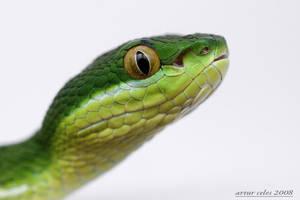 10.Green viper by Bullter