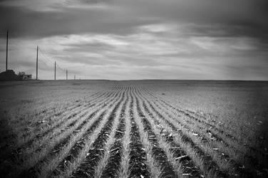 blown out fields by unusualenemy07