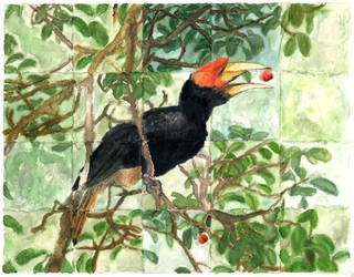 Hornbill and figs by Ethan-Carl