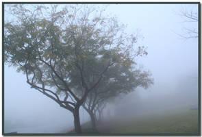 Foggy row by ShlomitMessica
