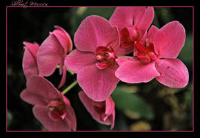 For Miliana by ShlomitMessica