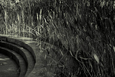 Fountain And Reeds by revnk