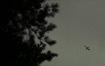 Bird by revnk