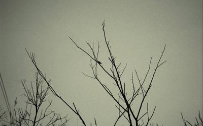 Bird 2008-09-19...01 by revnk