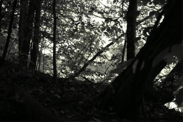 Woods 01 by revnk