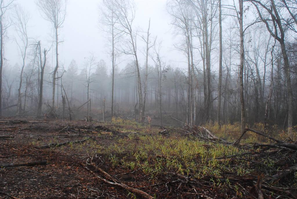 Fog 60 by lumibear