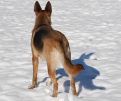 Snow Dog 49 by lumibear