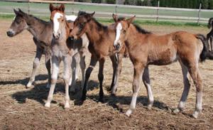Nurse Mare Foals 5 by lumibear