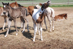 Nurse Mare Foals 9 by lumibear