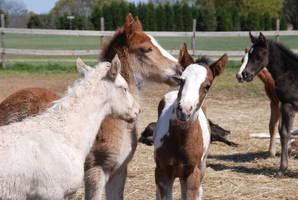 Nurse Mare Foals 21 by lumibear