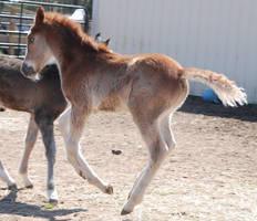 Nurse Mare Foals 88 by lumibear