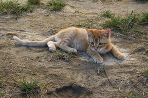 Cats 070 by lumibear