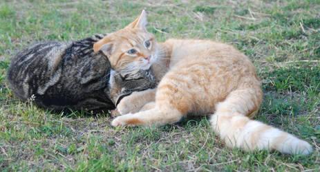 Cat Stock 022 by lumibear