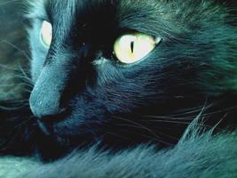 Black Cat by PrinceofPride