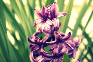 Purple flower. by YellowCandyfloss