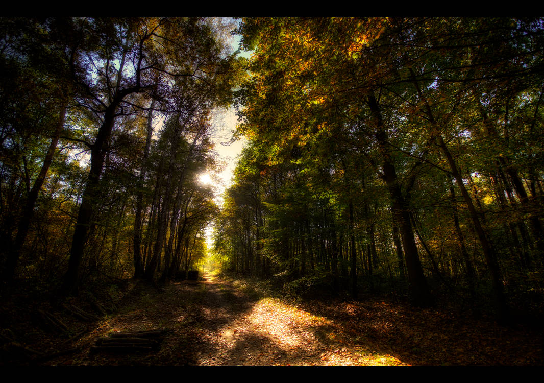 Tender Light by Beezqp