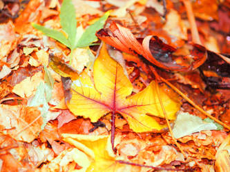 Autumn..? by Momoksha