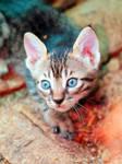 Curiosity by Momoksha