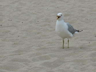 OMG Seagull by cubs2084