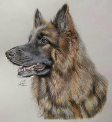 German shepherd portrait by Ceril91