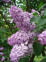 flower 1 by Dj-Steaua