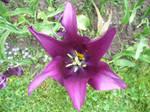 flower 2 by Dj-Steaua