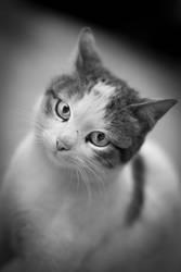 Got Catnip? by CybertronicStudios
