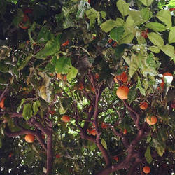 Life as an Orange by BrendanWrighting