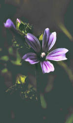 Hazy Flower by BrendanWrighting