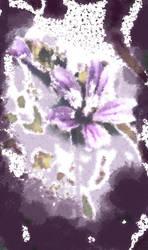 Bloom in Fog by BrendanWrighting