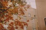 orange mood by NPenguin