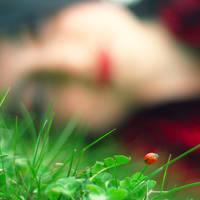 The Ladybird by recepgulec