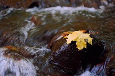 Yellow Leaf by recepgulec