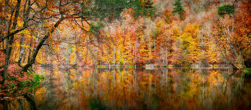Orange Reflections by recepgulec